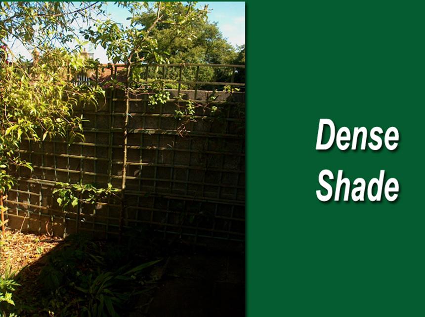 Dense-shade