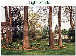 Hostas_AAA_Shade-Light